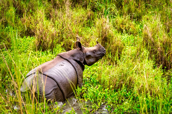 Rhino In Marsh Photography Art | Beth Sheridan, Grace Fine Art Photography