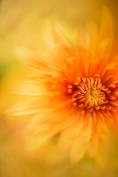 Orange And Yellow 1 Photography Art | Grace Fine Art Photography by Beth Sheridan