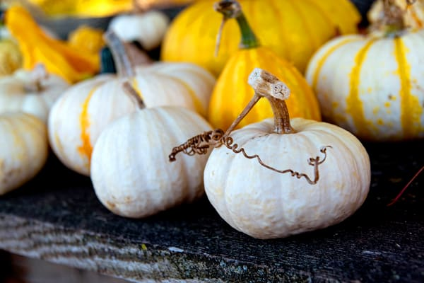 Pumpkin Gourds Autumn Harvest Fall
