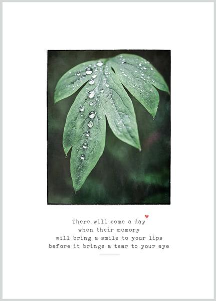 Tears Sympathy | Terry Lee Cafferty