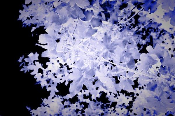 Blue Leaves Art | onlythemoon