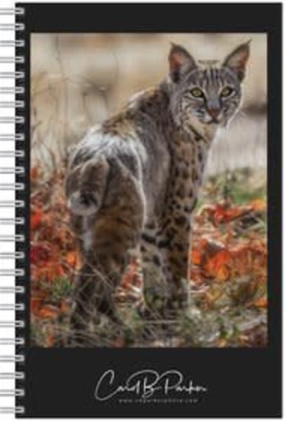 Photo Notebook   The Bobcat | Carol Brooks Parker Fine Art Photography
