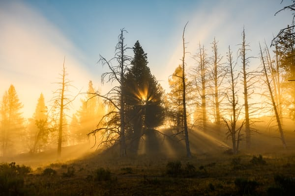 Tree Heart  Yellowstone Photography Art | Casey McFarland Photography
