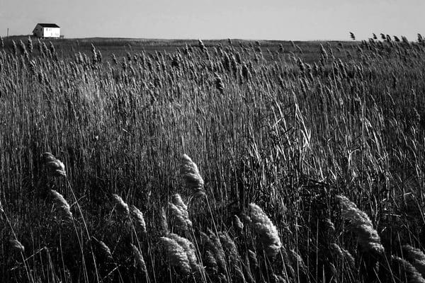 Salt Water Marsh Photography Art | Peter Welch