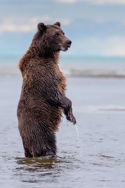 Brown Bear Lookout