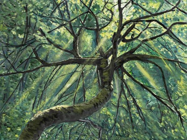 Crestwood Morning Art | Dave Fox Studios