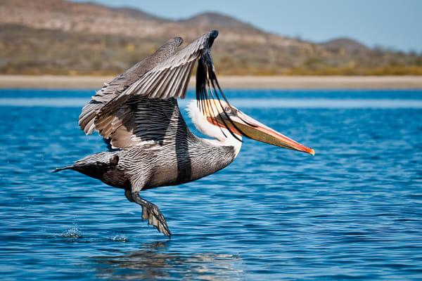 Fly By Photography Art   Carol Brooks Parker Fine Art Photography