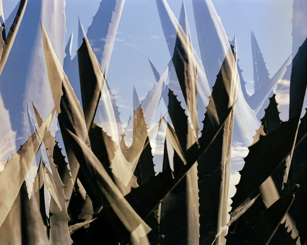California Landscape Photography - Agave Double Exposure