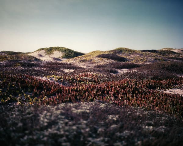 California Landscape Photography - Dune Study - Surf Dunes
