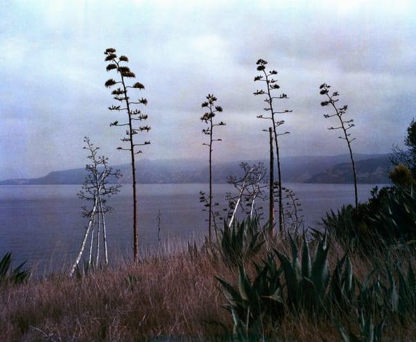 California Landscape Photography - Agave and Yucca - Santa Cruz Island