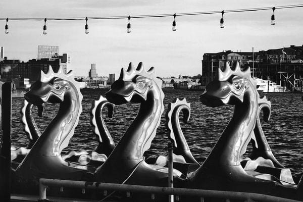 Baltimore Aquatic Life Photography Art | Peter Welch