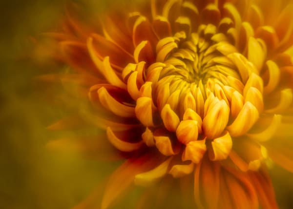 Red And Yellow 1 Photography Art   Grace Fine Art Photography by Beth Sheridan