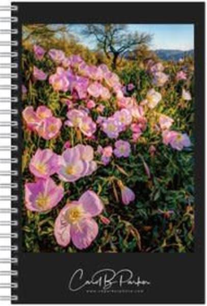 Photo Notebook   Sonoran Spring | Carol Brooks Parker Fine Art Photography