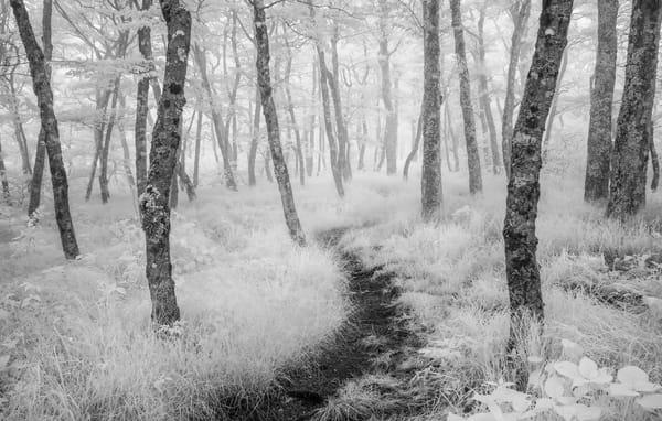 Rambling through Forest Fog II Photograph