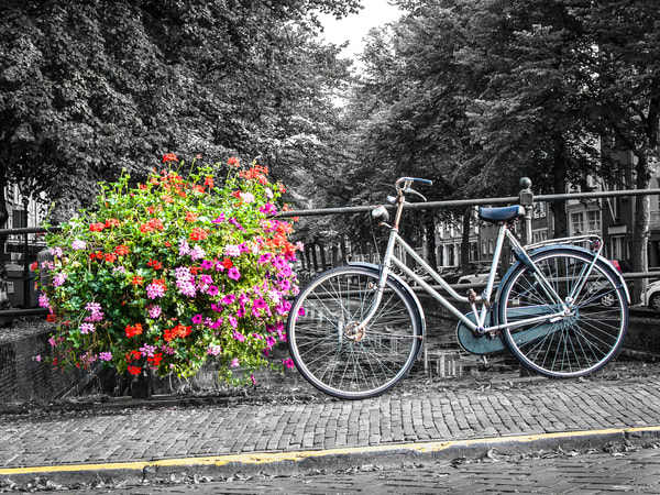 Petals And Pedals Amsterdam Photography Art | The World in Black and White