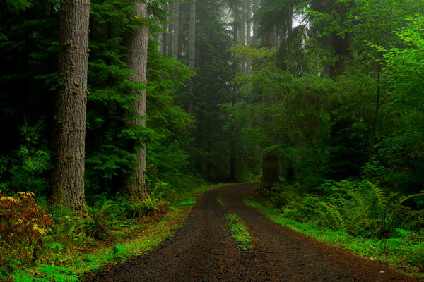 Forest Road, Pacific County, Washington, 2020