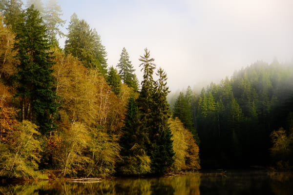 Foggy Autumn Morning, Lake Sylvia, Washington, 2020