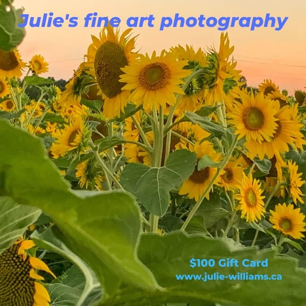 $100 Gift Card | Julie Williams Fine Art Photography