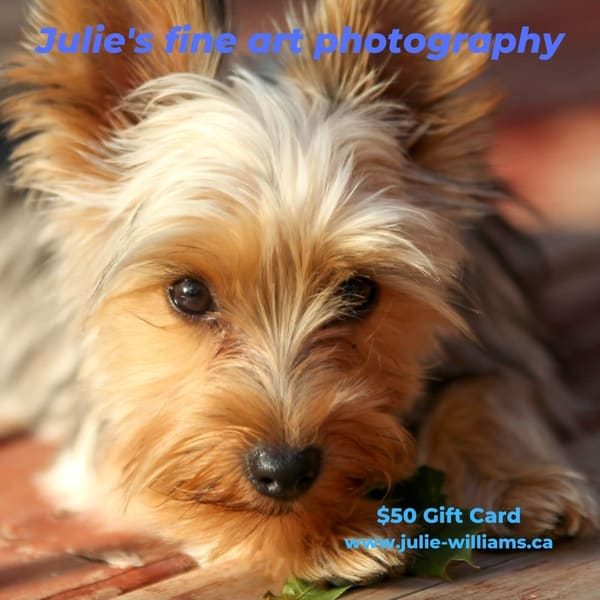 $50 Gift Card | Julie Williams Fine Art Photography