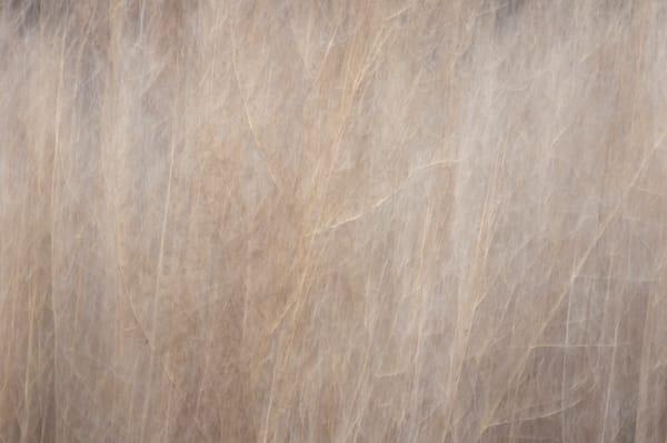 Weeds Photography Art | Kathleen Messmer Photography