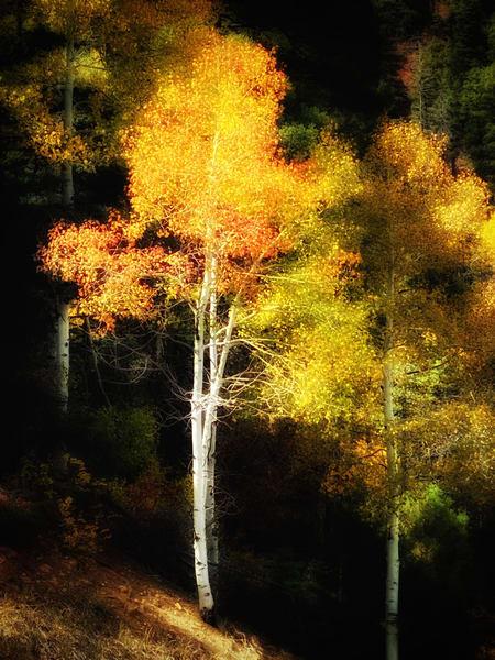 Aspen Glow Photography Art | Kathleen Messmer Photography