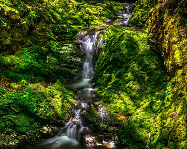 Mossy Trail Photography Art   Nelson Rudiak Photography