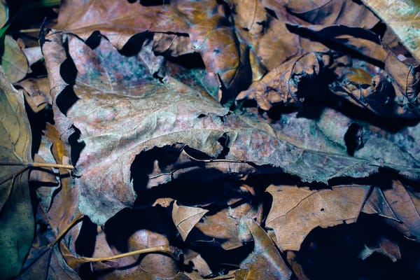 Decaying Leaves Art | Martin Geddes Photography