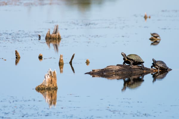 Turtle Reflections, Damon, Texas