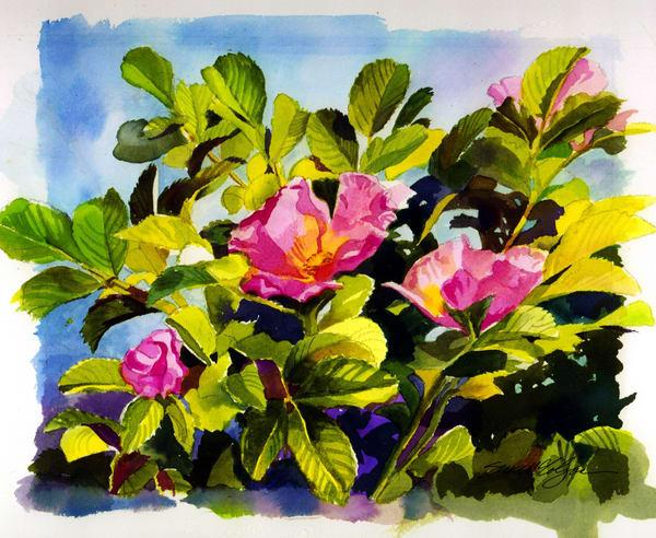 Roses Wild In Pink Art | susie mccolgan art
