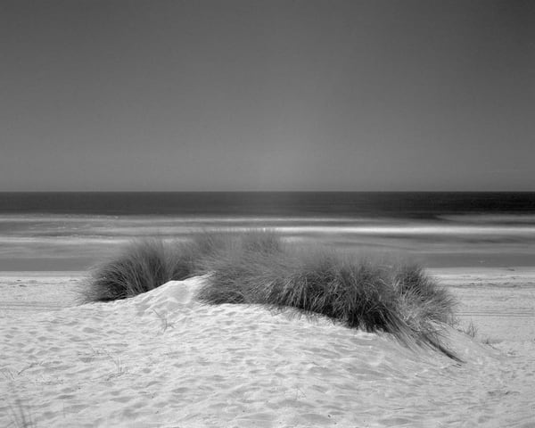 California Landscape Photography - Dune Grass - Oceano Dunes