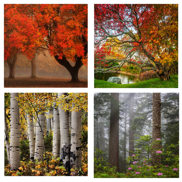 Trees Coaster Set | Ken Smith Gallery