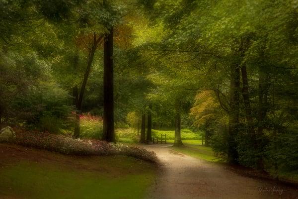 Country Road Photography Art | Thomas Yackley Fine Art Photography
