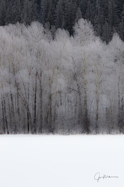 A photo of snowflakes cling to the trees in the woods of Colorado