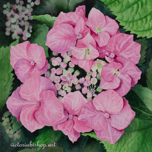 Hydrangea Art | victoriabishop.art