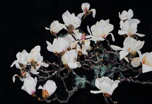 White Magnolia  Art | victoriabishop.art