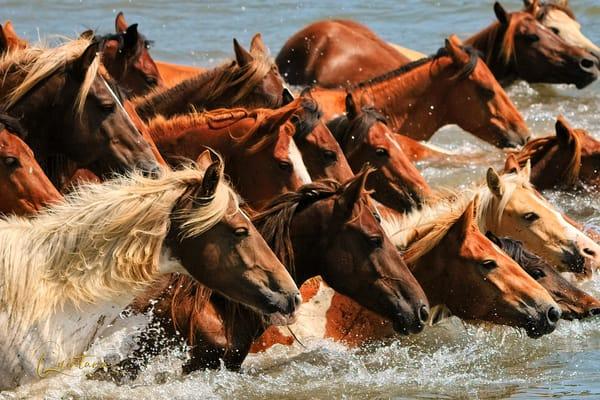 As Ponies Swim - A Fine Art Photograph by Marcos R. Quintana