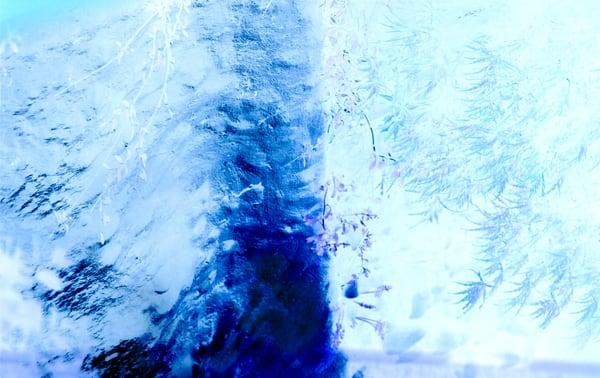 Tree Wind Ice Mushroom House