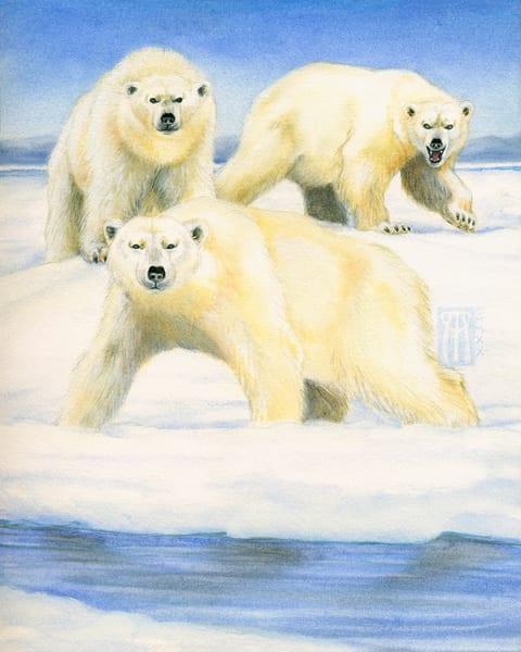 polar bears rpg