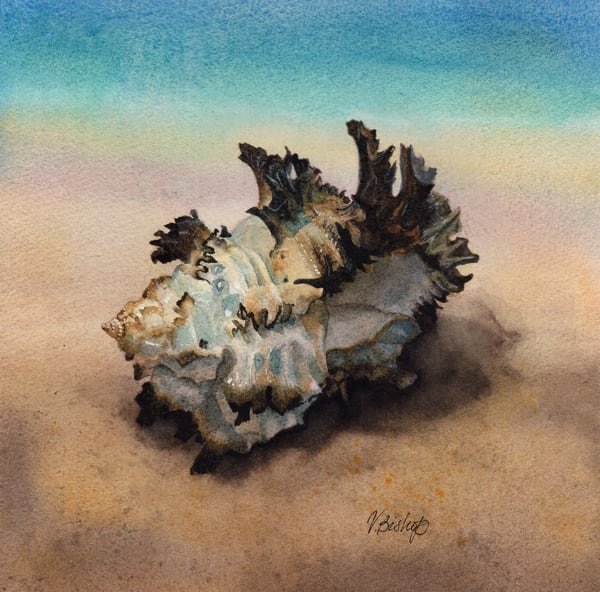 Seashell Art | victoriabishop.art
