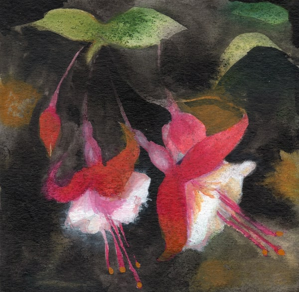 Fuchsia Art | victoriabishop.art