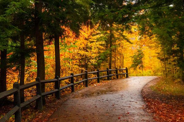 Autumn pathway Pines Tahquamenon colors