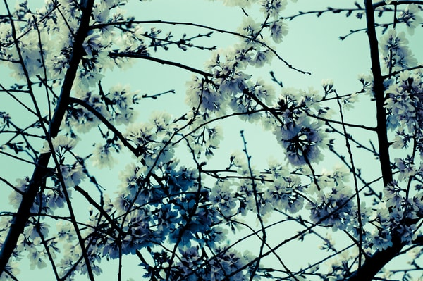 Botanical Photography | Prints