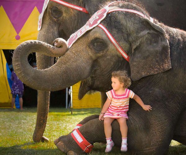 A Girl And Her Elephant Photography Art | Mark Stall IMAGES