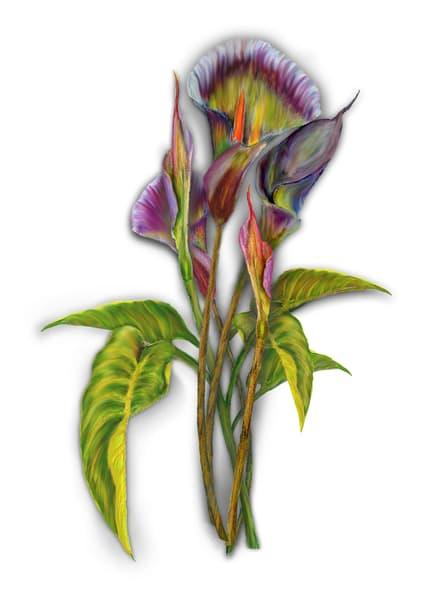 Endangered Calla Lilies Art   Art from the Soul