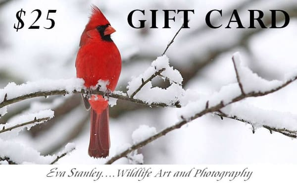 $25 Gift Card | Drawn To Nature