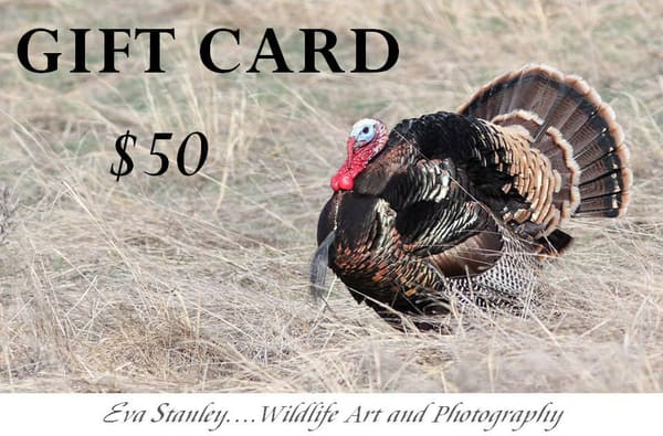 $50 Gift Card | Drawn To Nature