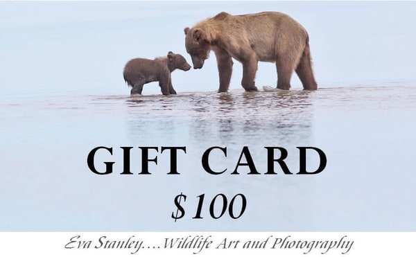 $100 Gift Card | Drawn To Nature