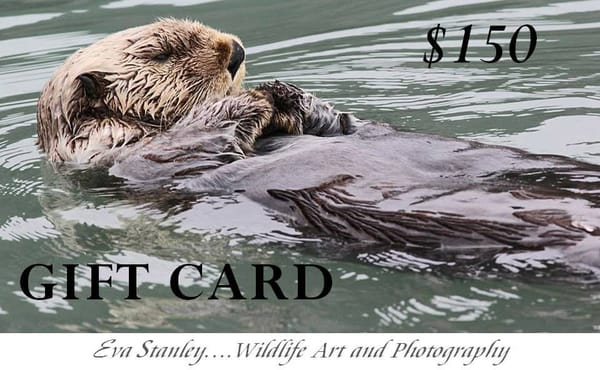 $150 Gift Card | Drawn To Nature