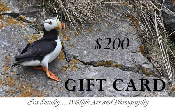 $200 Gift Card | Drawn To Nature