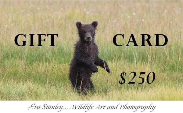 $250 Gift Card | Drawn To Nature